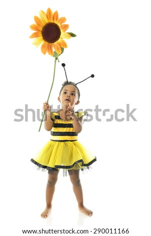 "An adorable 2 year old ""bumble bee"" looking up in awe at the large sunflower she holds.  On a white background. - stock photo"
