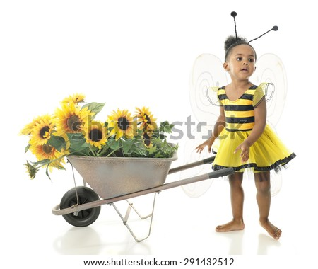 "An adorable 2 year old ""worker bee"" asking where she should haul her wheelbarrow full of sunflowers.  On a white background."
