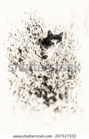 An adult tortoise-shell female cat looking at camera masked partially by a tree into the garden of the house. Black and white fine art portrait of domestic cat. - stock photo