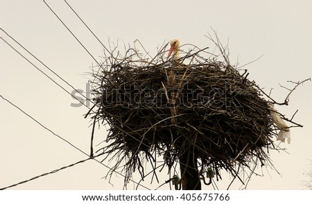 An adult white stork in a nest, spring, natural wildlife, harmony of nature