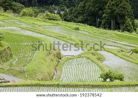 An aerial view of farmland with many rows of new growth. - stock photo