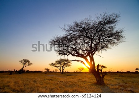 An African sunset in Hwange National Park - stock photo