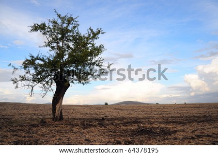 an alone tree