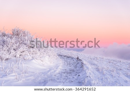 An amazing morning alpenglow along the Appalachian Trail on Round Bald on the Tennessee side of the Roan Highlands.  - stock photo