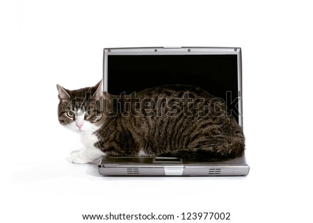 An angry cat sitting on a laptop keyboard on a white background.