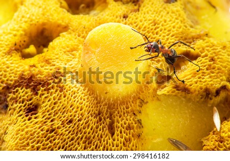 An ant crawling on a close-up mushroom - stock photo