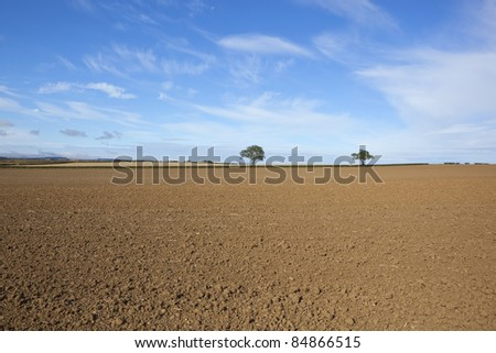 an arable landscape with two trees and hedgerows on the horizon of a cultivated field with bare soil under a blue sky - stock photo