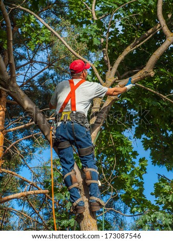 An Arborist Cutting Down a Tree Piece by Piece - stock photo