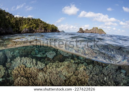 An array of beautiful corals grow in shallow water near limestone islands in Raja Ampat, Indonesia. This area of the western Pacific is known for its high marine biological diversity and its beauty. - stock photo
