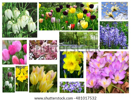 An array of beautiful spring flowers.