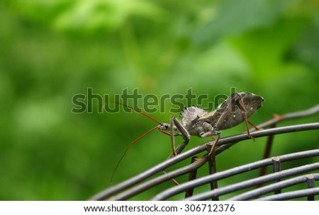 An Assassin Bug on a fence outside during a summer day. - stock photo