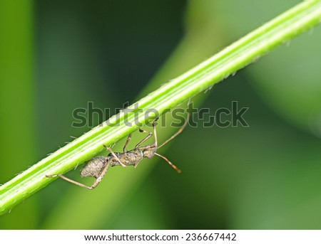 An assassin bugs on the green plants, close-up  - stock photo