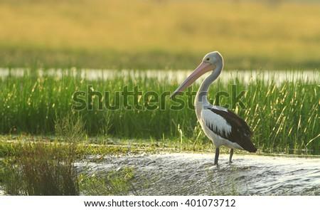 Wetland Imágenes ...
