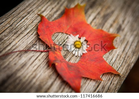 An autumn leaf with heart shaped cutout and flower. - stock photo