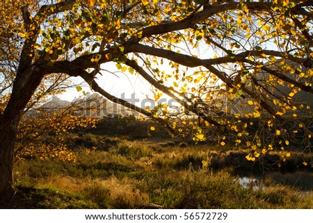 An autumn tree silhouette at sunset - stock photo