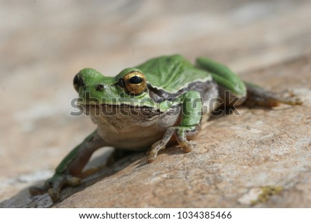 An closeup of a tree frog on rock