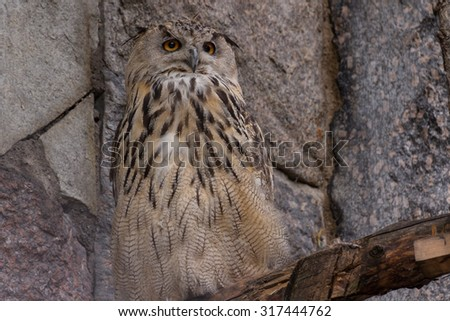 An eagle-owl in the zoo - stock photo