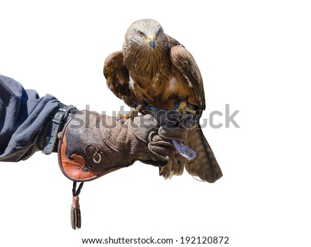 An eagle standing on the globe of a falconer - stock photo