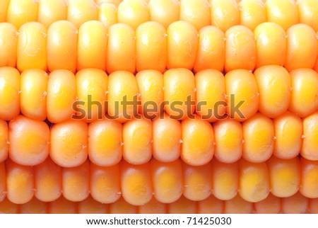 An ear of ripe corn - stock photo