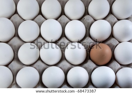 an egg brown into white eggs, representing visible minority - stock photo