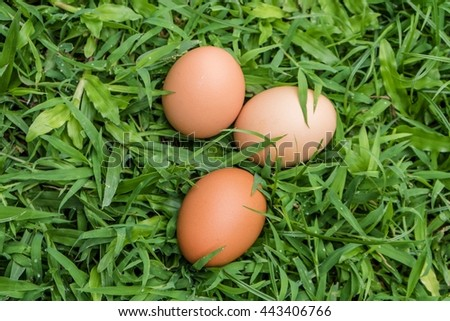 An egg is down on yard