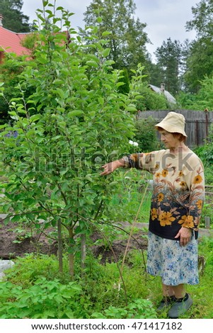 An elderly woman gardener standing next to a young Apple tree in the garden in the suburbs of Saint-Petersburg, Russia