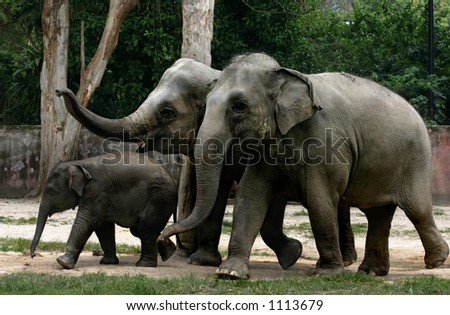 An elephant family at the Taiping Zoo