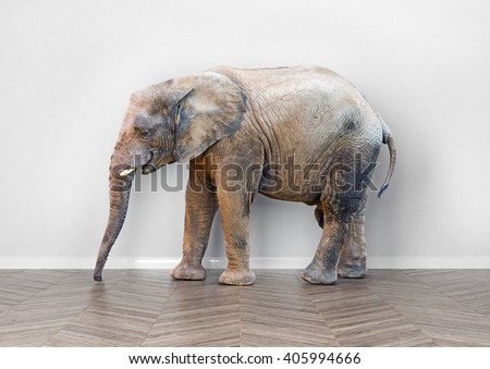 an elephant  in the room near white wall. Creative concept - stock photo