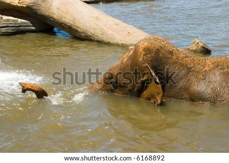 an elephant in the water with tree trunk