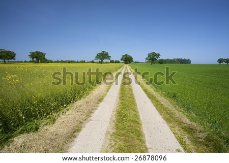 an empty country roud through green meadows