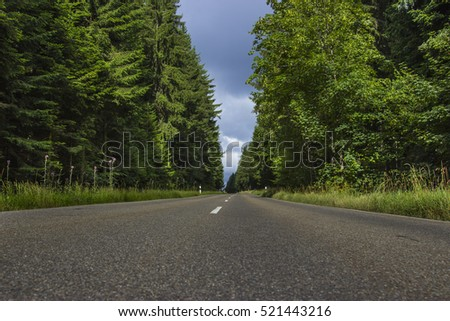 An endless road in the Forest