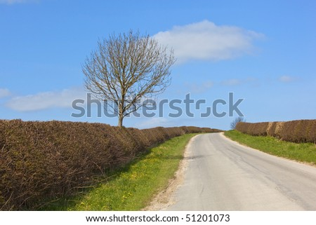 an english country road with hedgerows and trees going over a hill against a sunny blue sky