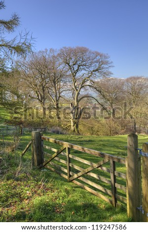 An English countryside scene in spring with five bar gate and beech trees