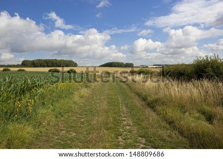 an english rural bridleway in a yorkshire wolds landscape with wheat and maize crops under a blue cloudy sky in summer - stock photo