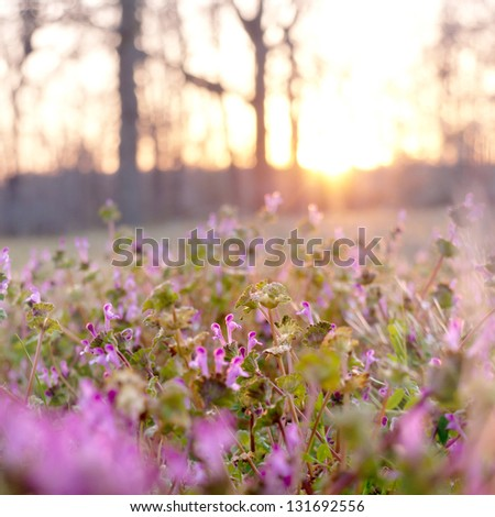 An evening shot of some clover flowers in a field. - stock photo