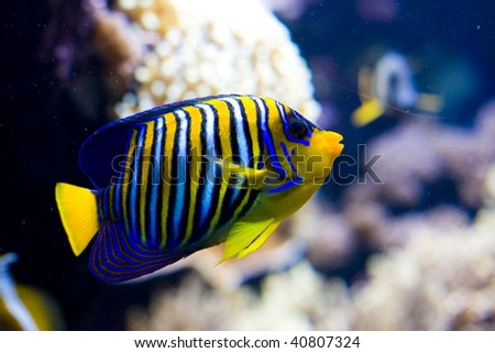 an exotic fish swimming