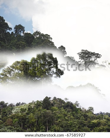 An exotic image of a tropical rainforest canopy on a misty early morning. - stock photo