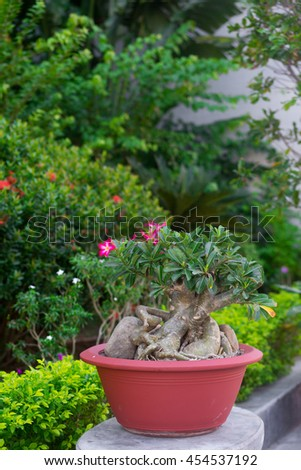 An exotic plant in the pot in the garden - stock photo