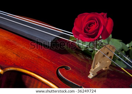 An expensive violin viola isolated on black with a red rose on the bridge.