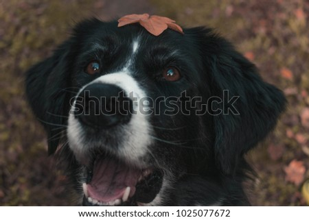 An happy dog with a leaf on his head.