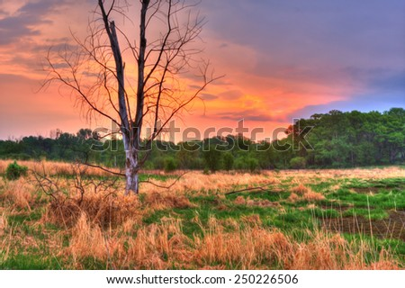 An HDR landscape of tress and a meadow in soft focus - stock photo