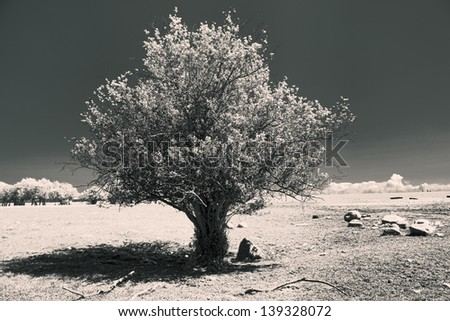 An image altered to a B&W infrared to depict the heat of a hot sunny day.