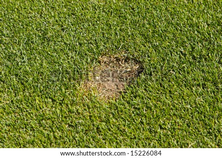 An image of a divet in a golf course - stock photo
