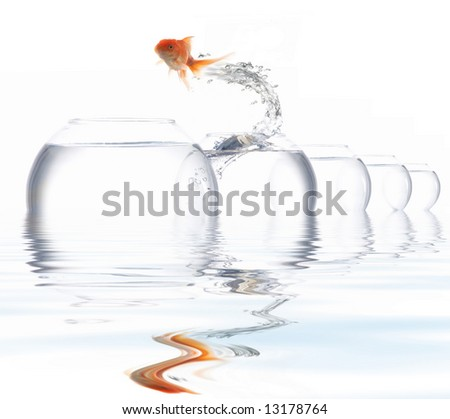 An image of a golden fish leaping out of the water - stock photo