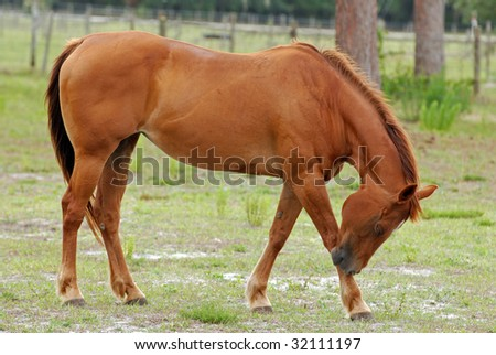 An image of a horse in the pasture