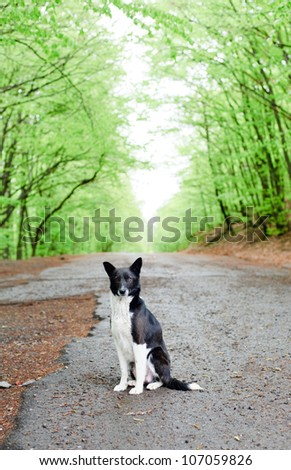 An image of a lonely dog on the road - stock photo