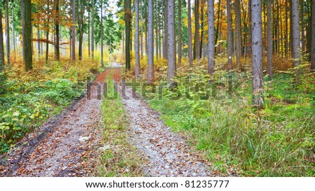 An image of a nice autumn forest background