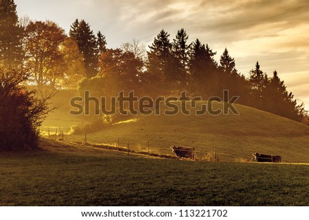An image of a nice autumn light with two cows - stock photo