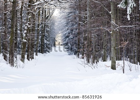 An image of a nice winter scenery in the black forest area - stock photo