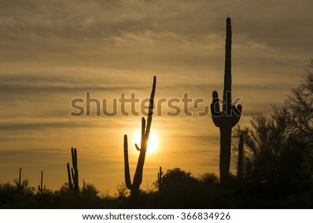 An image of a saguaro cactus during sunset at Superstition desert in Arizona shows the rugged detail of a dry, parched wilderness - stock photo